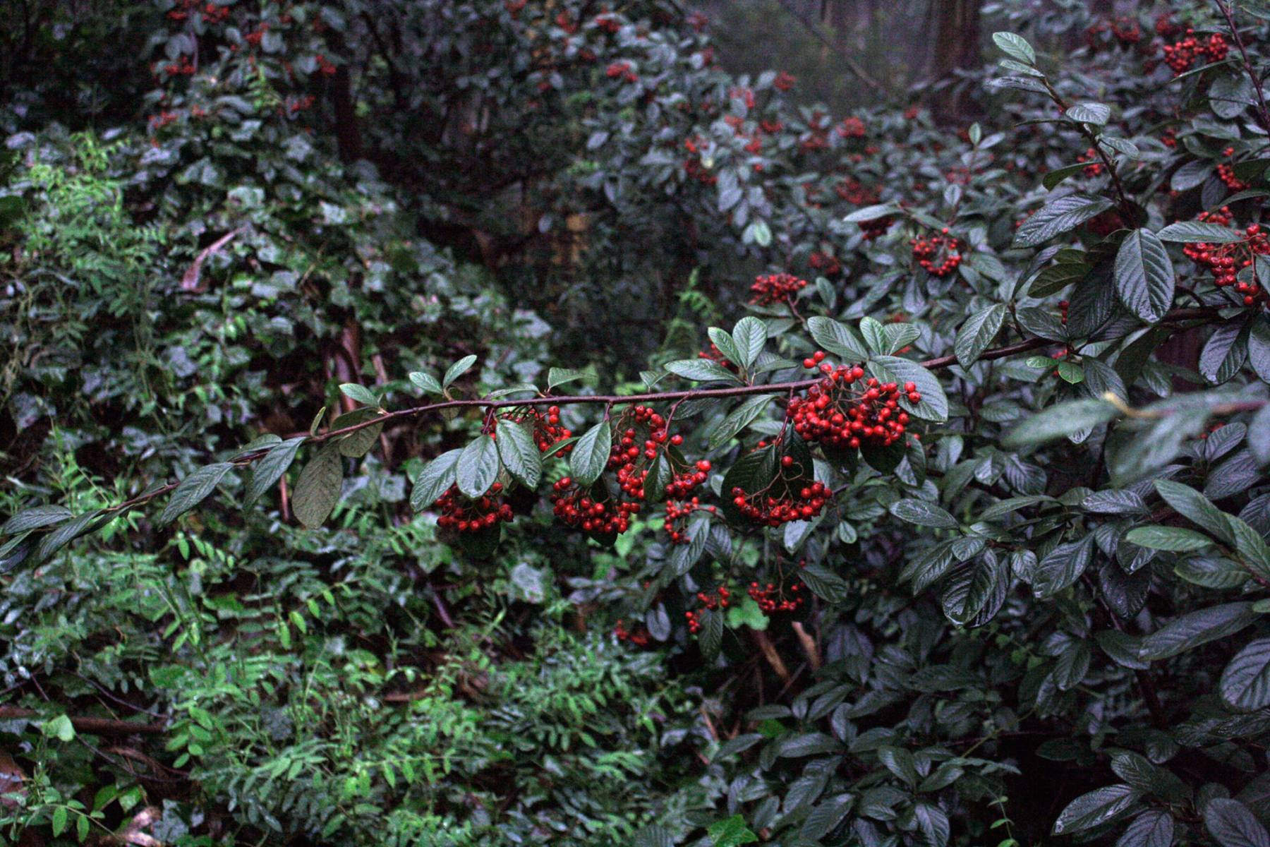 03-berries_sm