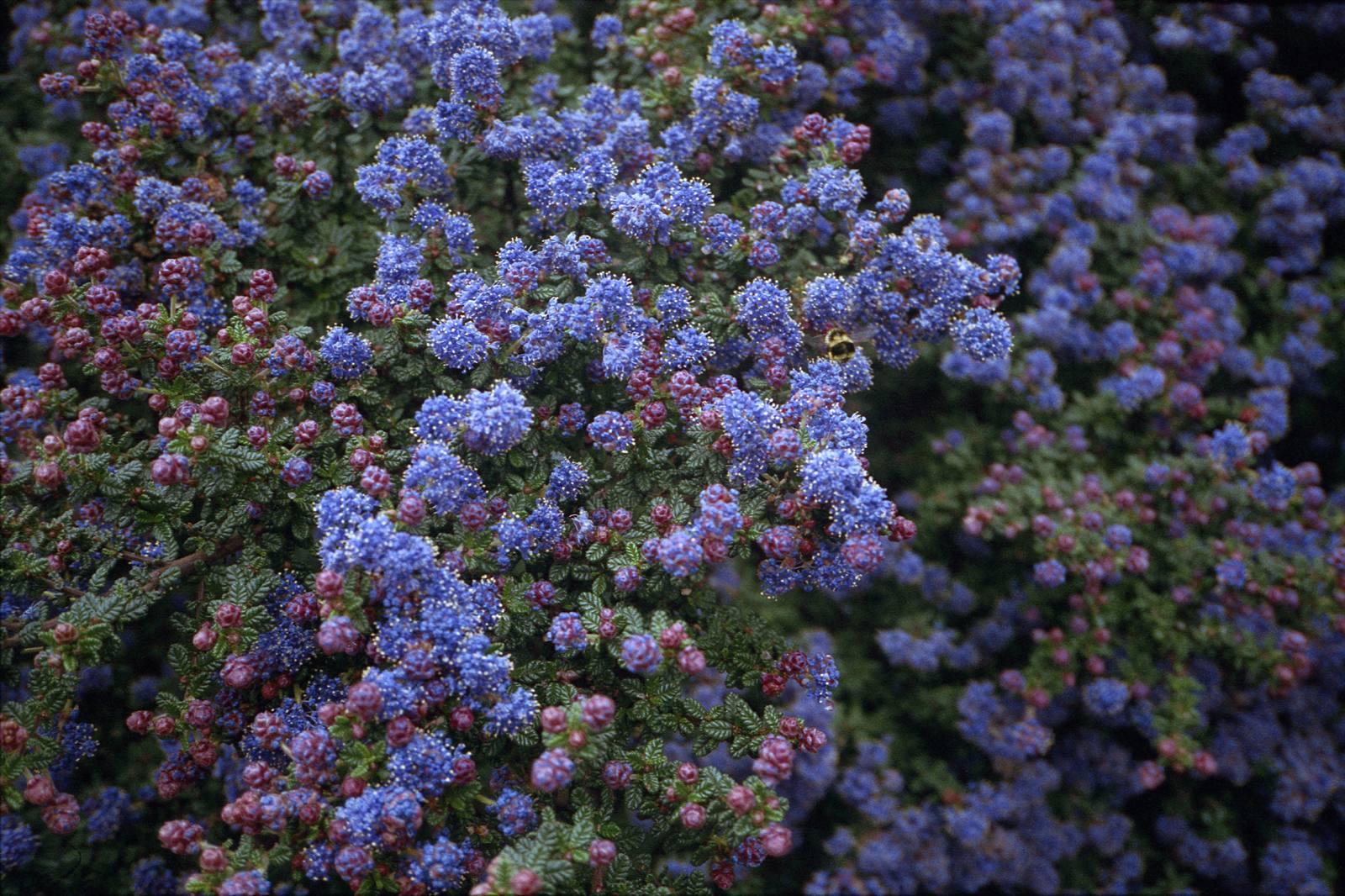 03-flower