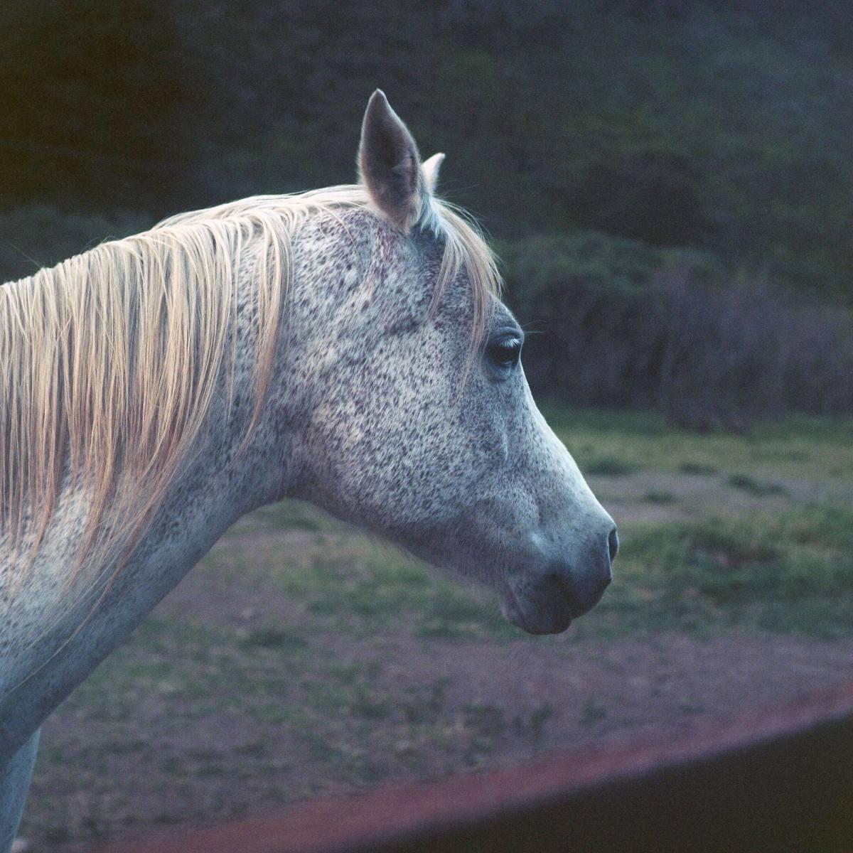 bigsurhorse